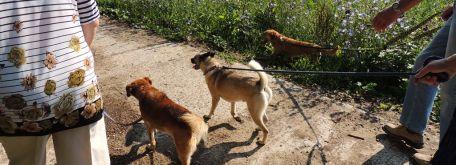 Venčenie psíkov z útulku - 06