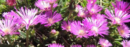 Flóra (čo nám tu práve kvitne) - m_DSCN1868