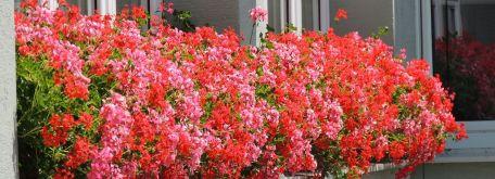 Flóra (čo nám tu práve kvitne) - m_DSCN2672