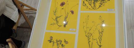 Prednáška o liečivých bylinkách vo vlastivednom múzeu pb - m_DSCN0674